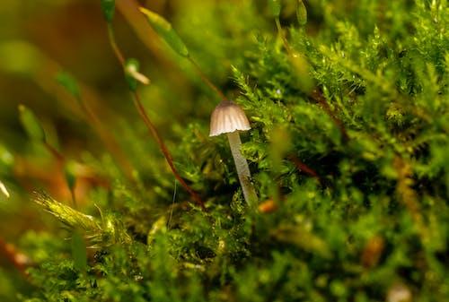 Imagine de stoc gratuită din anotimp, arbust, biologie