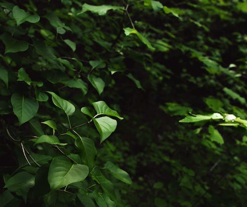 Free stock photo of forest, greenery, leaves