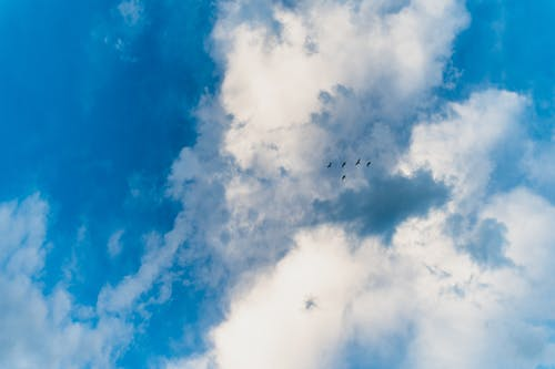 Birds soaring in bright blue cloudy sky