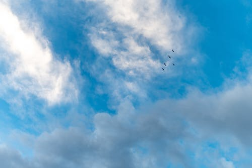 Flock of birds flying in shiny cloudy sky