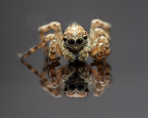 Small spider on reflecting surface