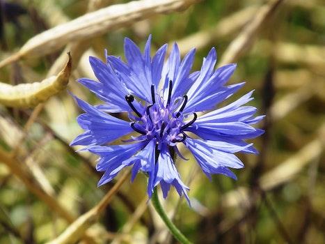 Bloomed Blue Petaled Flower