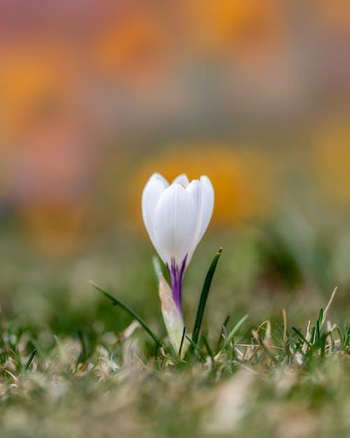 Delicate flower on green field