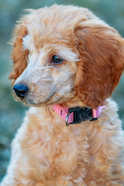 Beautiful dog with pink collar