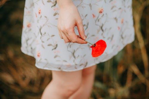 ahşap, anzak günü, Aşk, çiçek içeren Ücretsiz stok fotoğraf