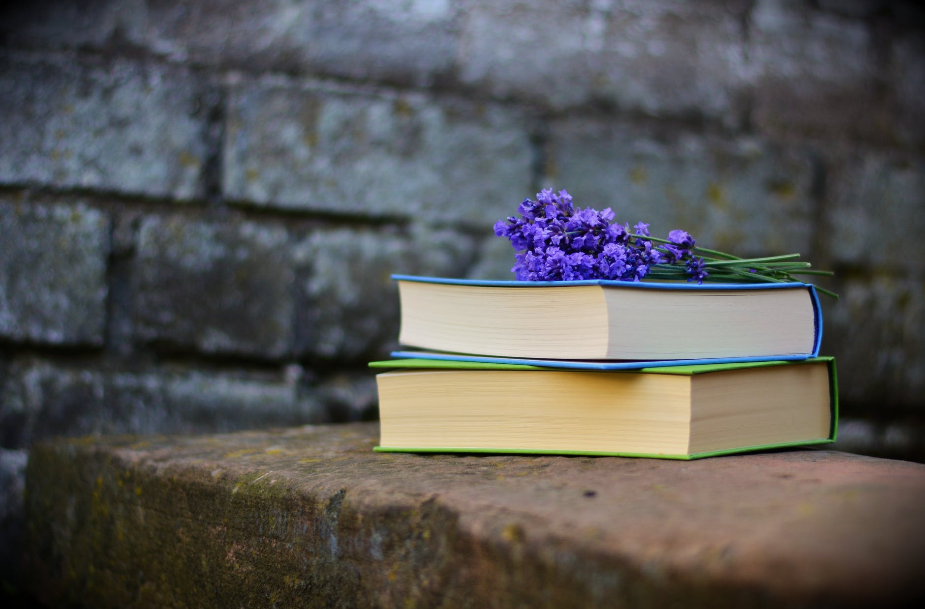 purple flower at the top of two books on a bench