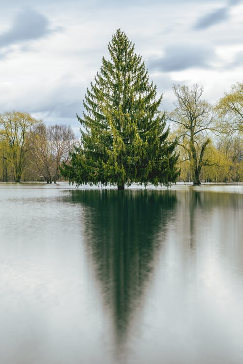 Evergreen tree reflecting in river under sky