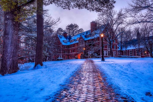 光, 冬季, 冰, 冷 的 免費圖庫相片