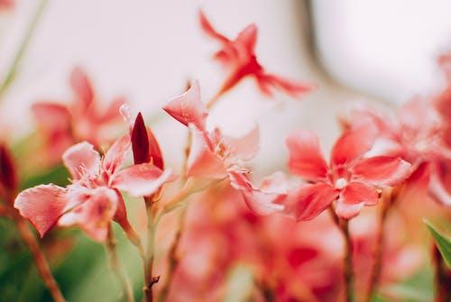 Fotobanka sbezplatnými fotkami na tému exteriéry, farba, flóra, hĺbka ostrosti