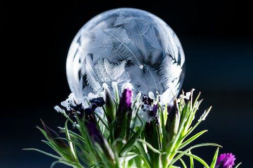 Bright flower bouquet near frozen soap bubble