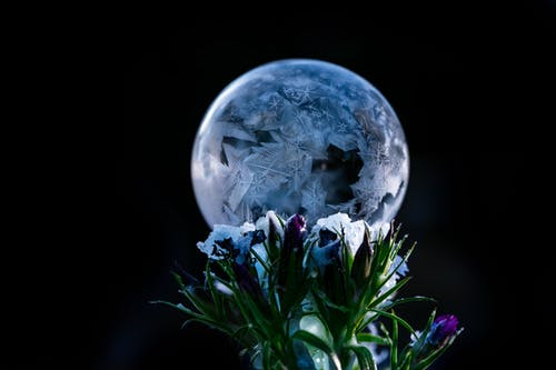 Decorative shiny ball near blooming flowers on black background