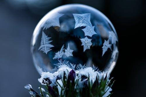 Frozen soap bubble with ornament near flowers