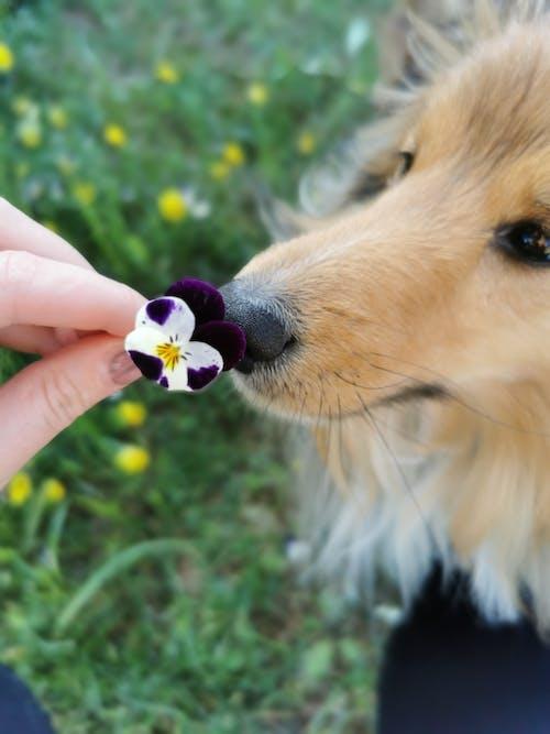 Free stock photo of dog, flower