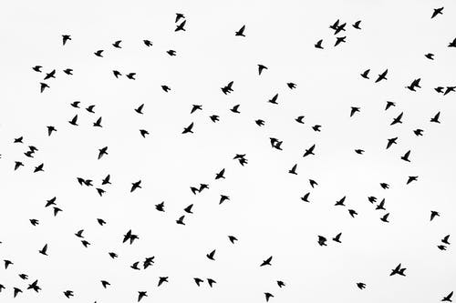 Flock of birds flying in white sky
