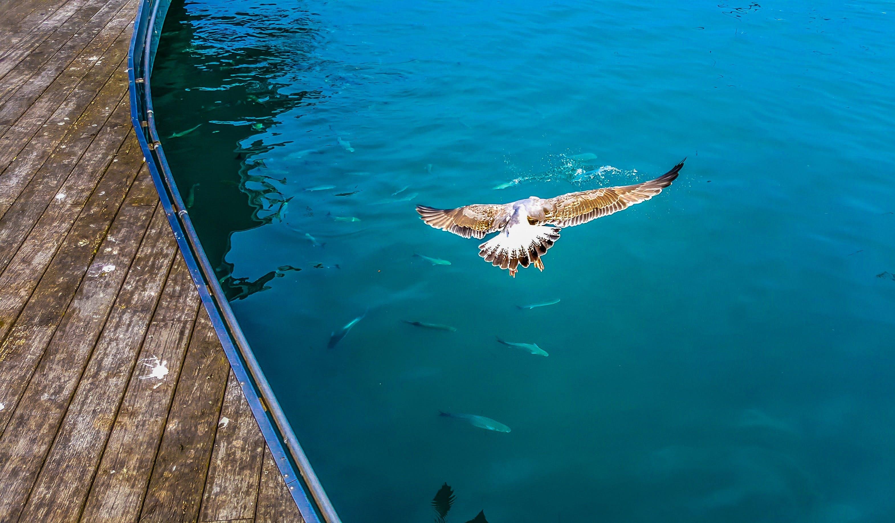Kostenloses Stock Foto zu draußen, federn, fisch, fliege
