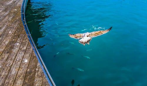 Fotobanka sbezplatnými fotkami na tému krídla, lietanie, more, oceán