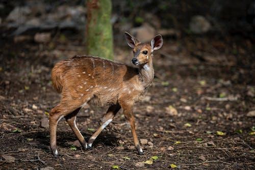 Immagine gratuita di animale, animale selvatico, bambino, campo