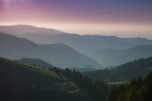 Základová fotografie zdarma na téma černý les, hory, les, příroda