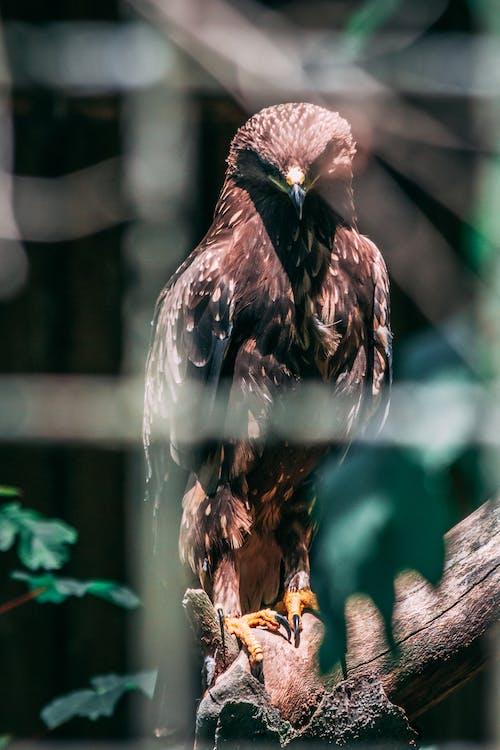 Free stock photo of lovebirds, wood, zoo