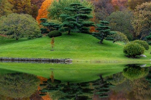 Scenic lush mixed green near calm lake