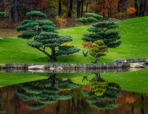 Amazing view of abundant Japanese niwaki trees growing in lush mixed forest on grassy lake shore and reflecting in calm clean water on early autumn day