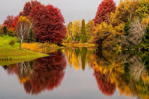 Amazing scenery of autumn woodland with bright red and yellow foliage growing on peaceful pond shore and reflecting in still water surface