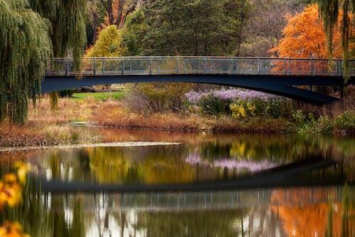 Bridge over tranquil lake in autumn park
