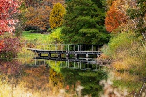 Narrow footbridge crossing calm lake in abundant autumn park