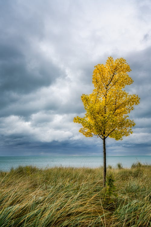 Lonely tree with yellow leaves on river shore