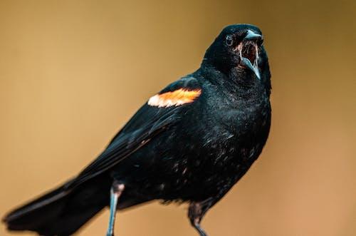 Black Bird on Brown Stick
