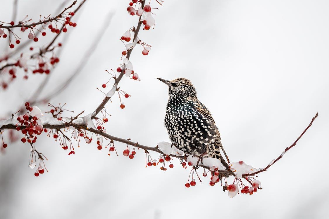 Cute starling bird sitting on frozen tree branch