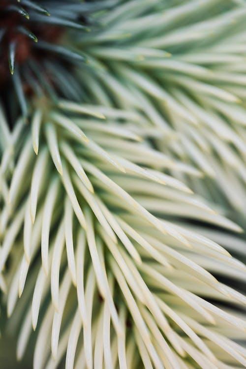 Macro Photography of Pine Needles