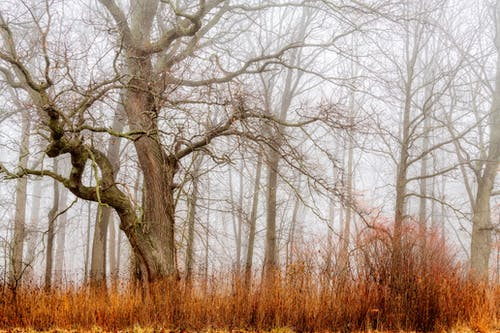 Long tall brown leafless trees above dry yellow grass in empty dense autumn forest
