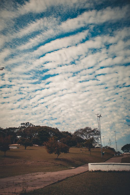 Altocumulus clouds over trees in park