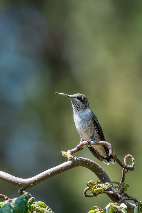 Small bird on snaking twig in sunlight