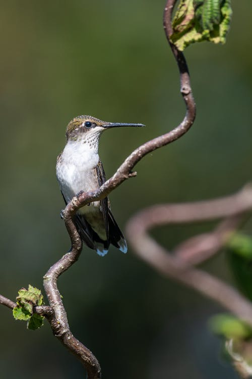 Tiny hummingbird with long beak sitting on branch