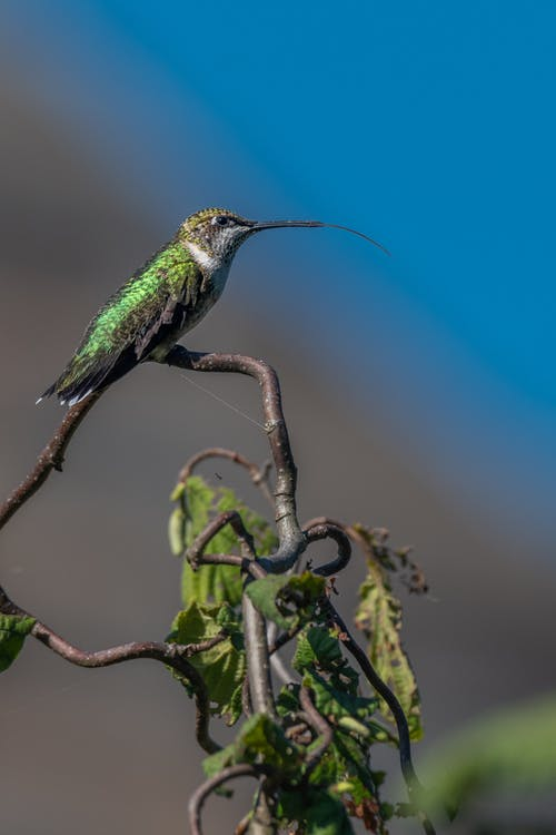 Low angle side view of exotic bee hummingbird with bright green plumage on tree against  blue sky and nature