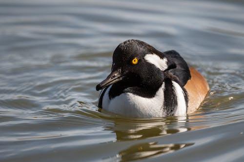 Single wild wet waterbird in pond