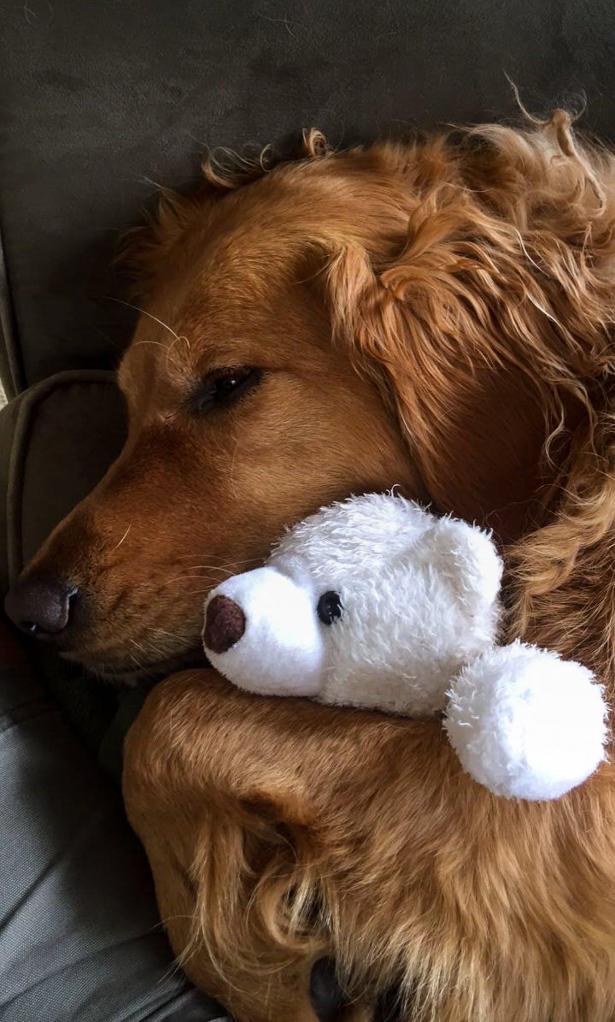 Free stock photo of love, animal, dog, pet