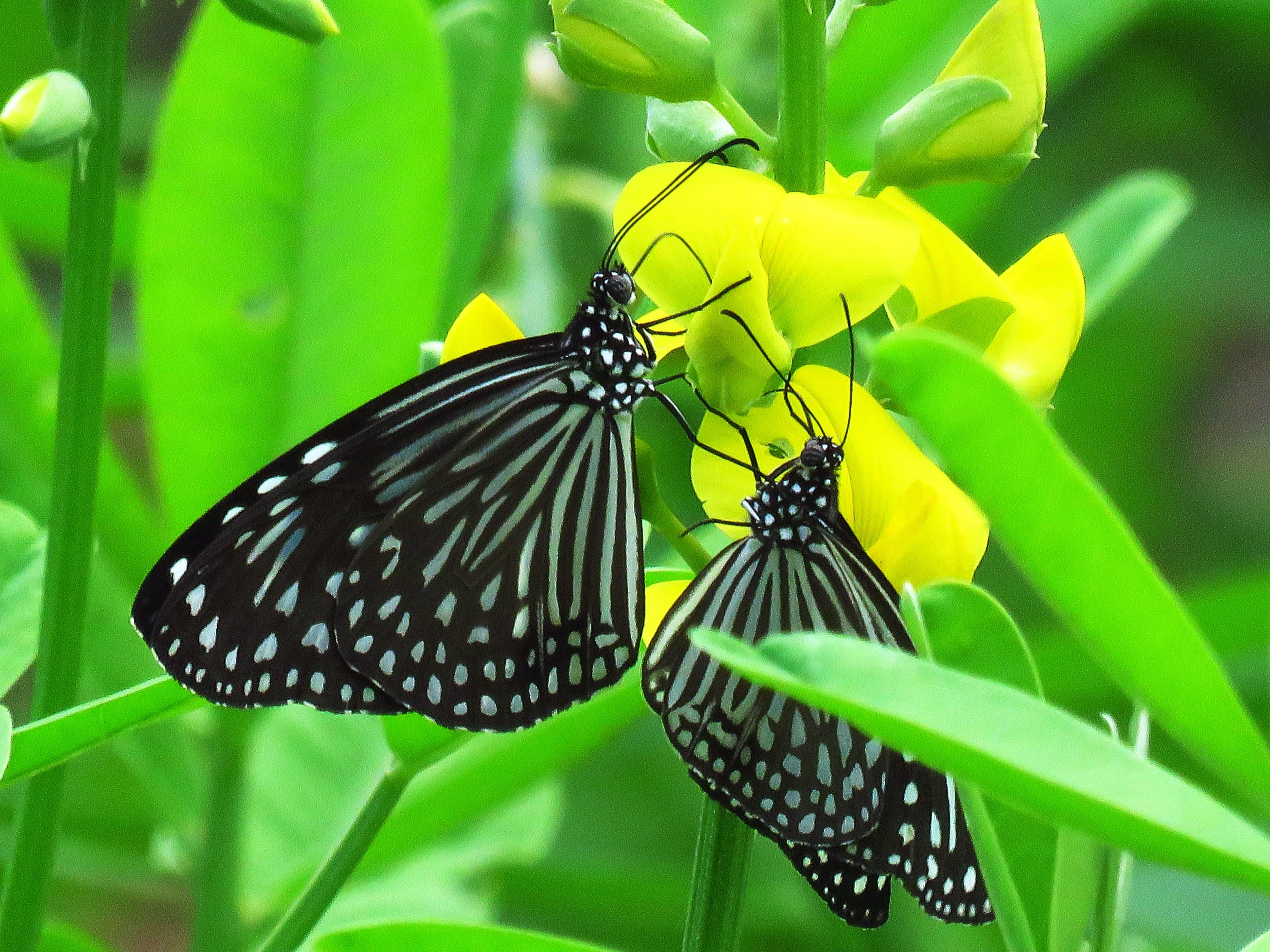về cận cảnh, cánh, Con bướm, côn trùng