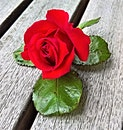 red, petals, flower