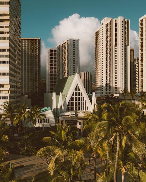 Green Palm Trees Near High Rise Buildings