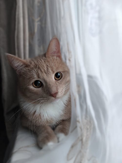 Cute cat resting on windowsill near curtain