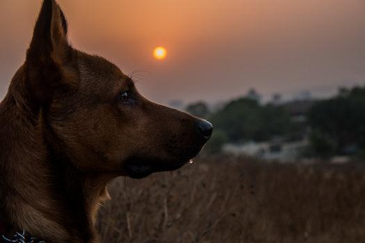 Free stock photo of dawn, sunset, sunrise, dog