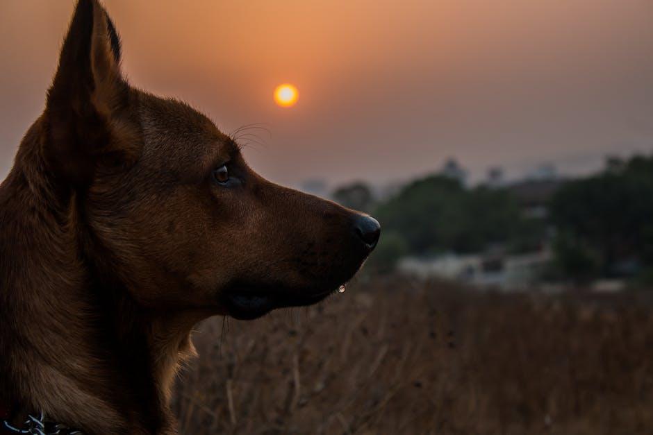 New free stock photo of dawn, sunset, sunrise