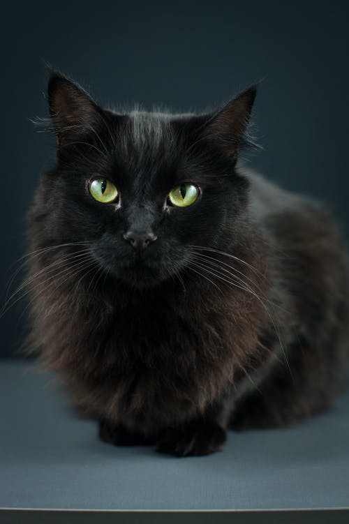 Black cat with green eyes resting on smooth surface