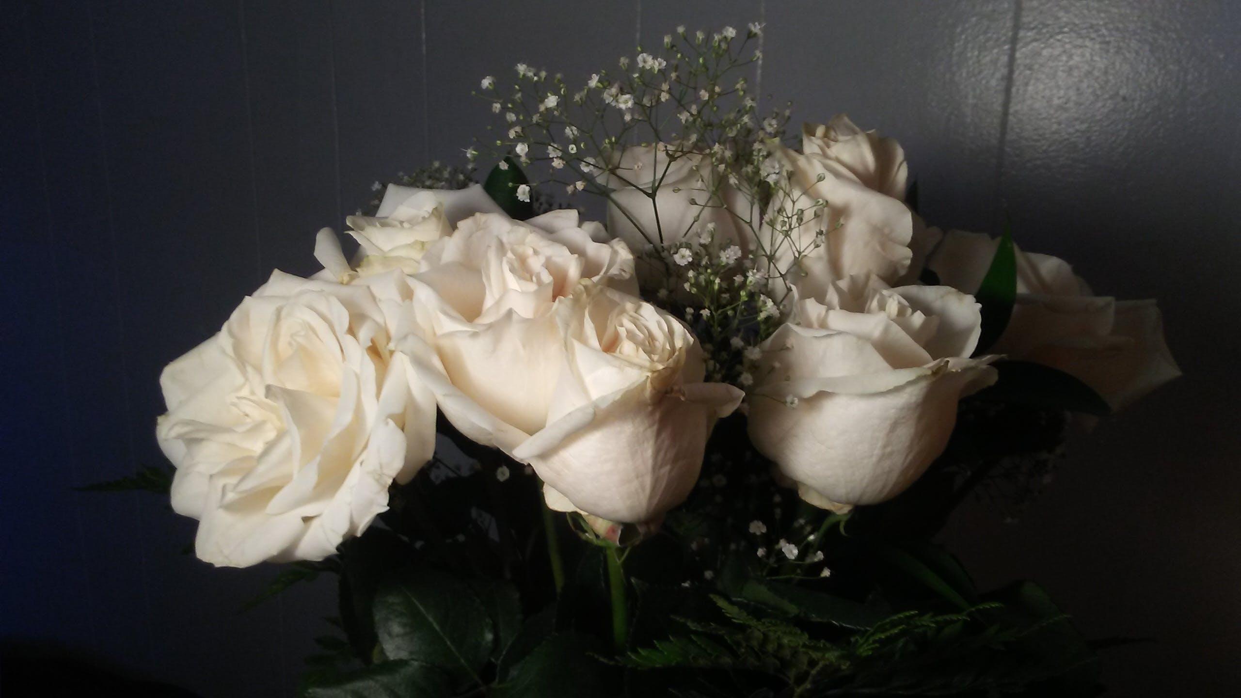 Free stock photo of love, flowers, white