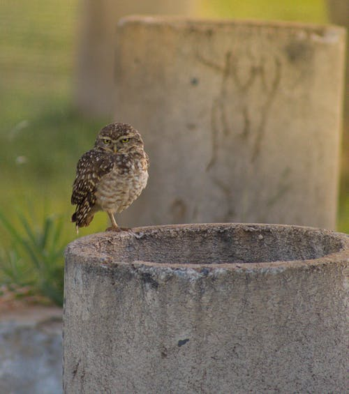 Carnivorous bird with ornamental brown plumage and focused gaze looking at camera while sitting on cement construction