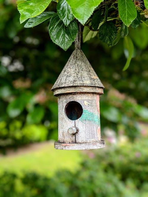 Old wooden bird feeder hanging on tree