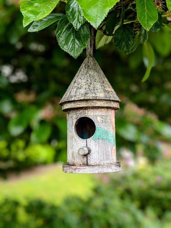 Old wooden bird feeder hanging on tree